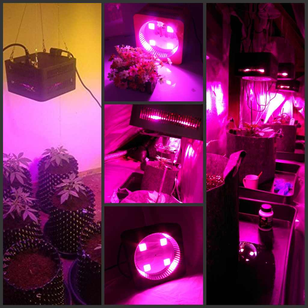 Most popular Single chip 100W led grow light lamp full spectrum high power grow lamp for indoor plant