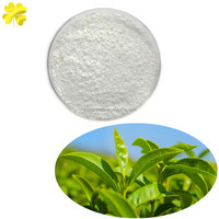 EGCG camellia sinensis O.Ktze extract 1 oz 2oz available free sample 100% natural sweetener green tea extract liquid