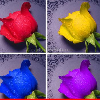 Ucuz 30x30 Cm Basit Gül çiçek Tasarım 5d Reçine Taş Diy Boyama Buy