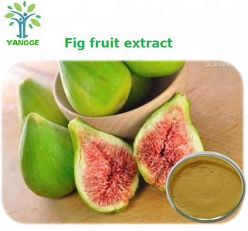 Iso Factory Supply Natural Fig Extract Ficin Ficus Carica Fruit Extract 10 1 Buy Tamarind Fruit Extract Ficus Carica Fruit Extract Herb Extract Product On Alibaba Com