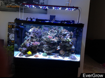 evergrow it5012 48 inch evergrow led light aquarium for fresh water