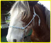 Polyester rope halter with lead , polypropylene best rope halter , pp best rope halters for horses