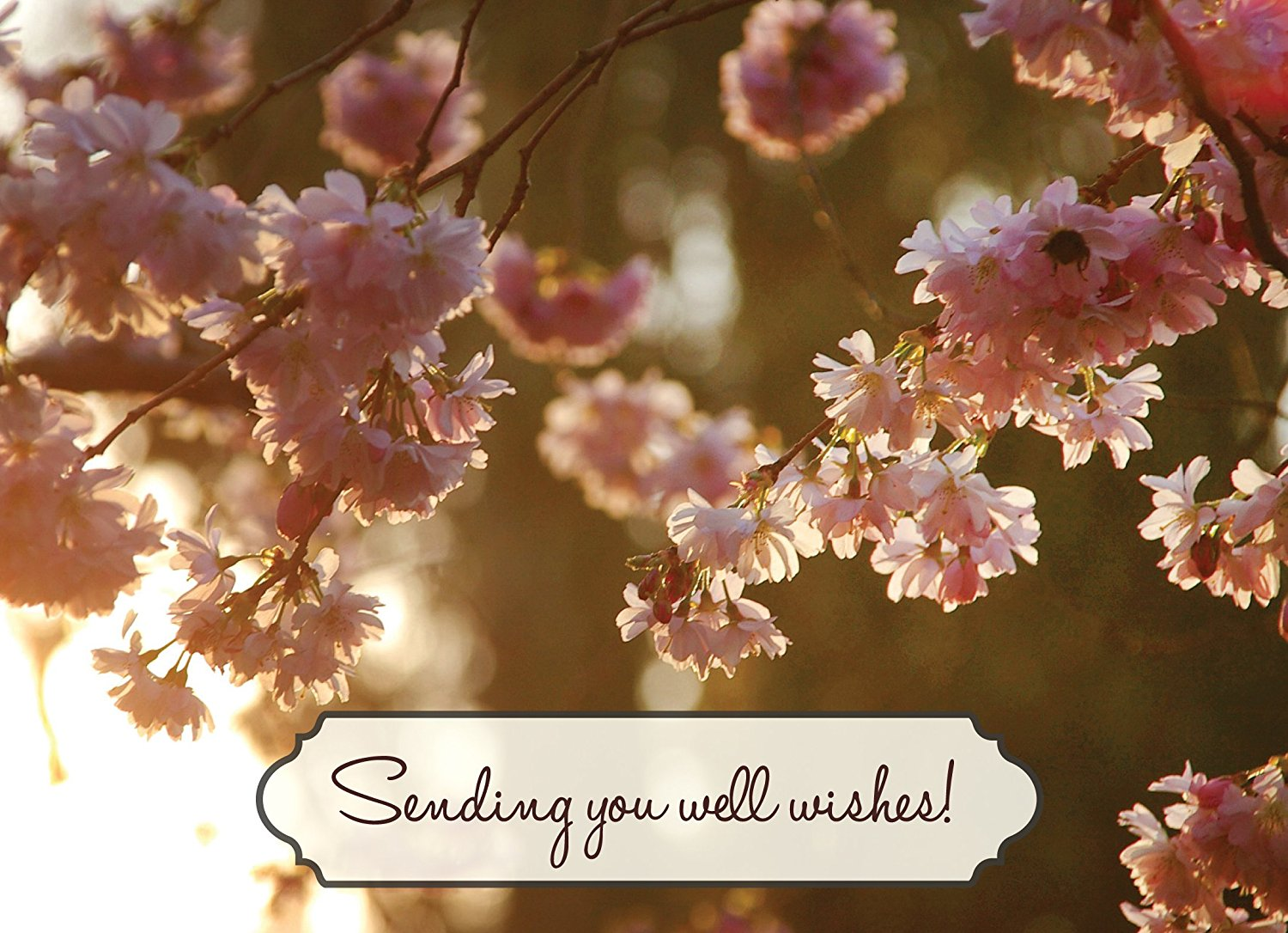 Buy Get Well Greeting Cards Gw1601 Business Greeting Card
