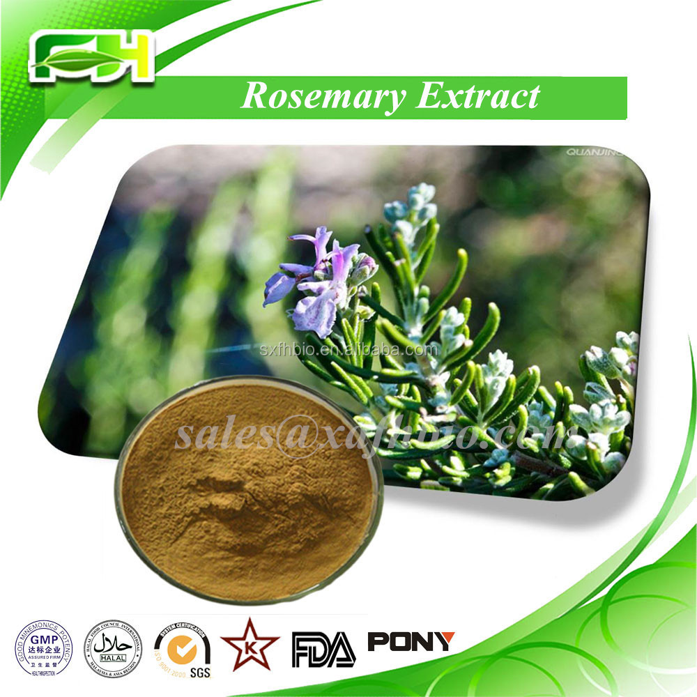 Natural Rosemary Extract Rosmarinic Acid