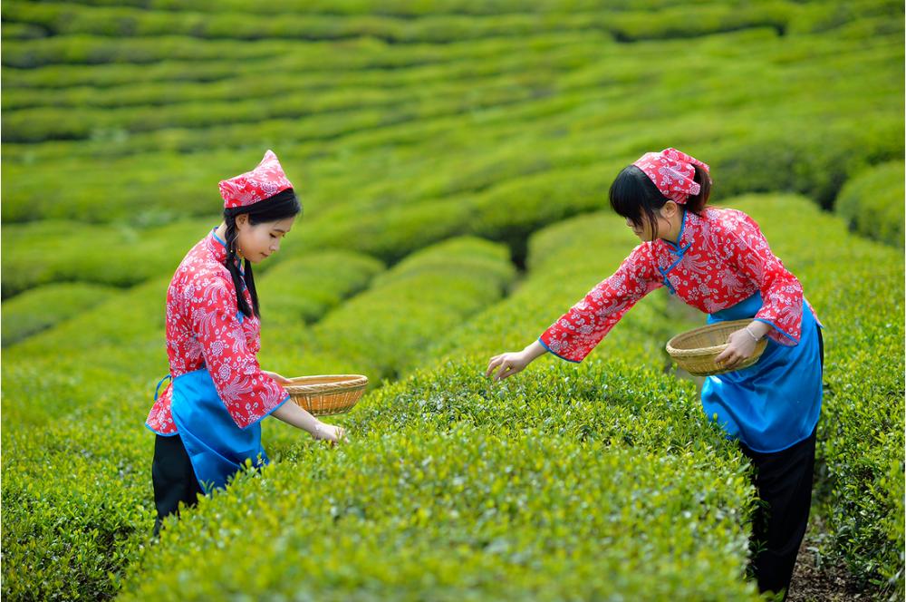 Runsi Premium Keemun Black Tea SHANGPINZHIZUN Gift box150g Slimming Tea High-end Gift Box - 4uTea | 4uTea.com