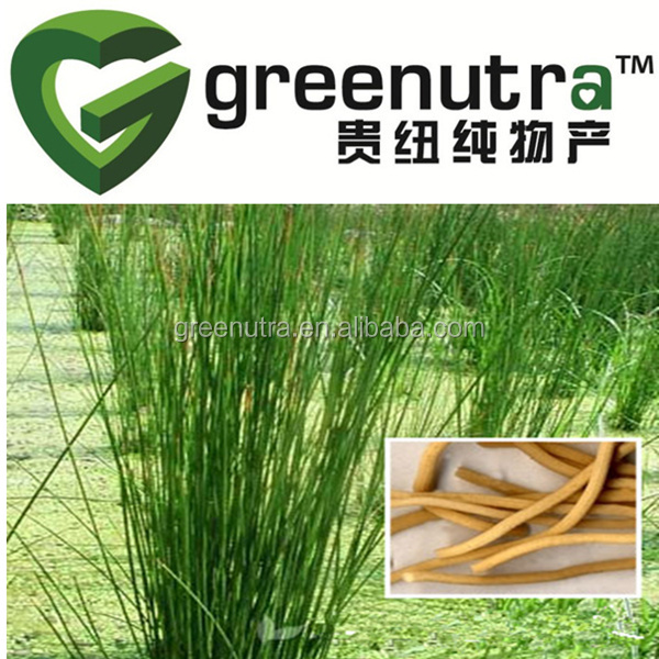 Juncus Bufonius Extract Powder