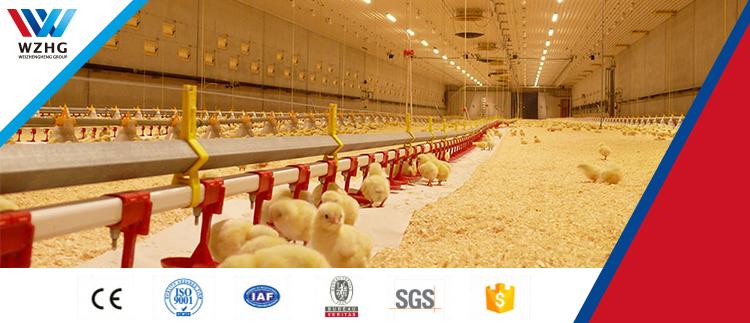 Poultry farming อุปกรณ์ปีก feeders ดื่มสำหรับขาย