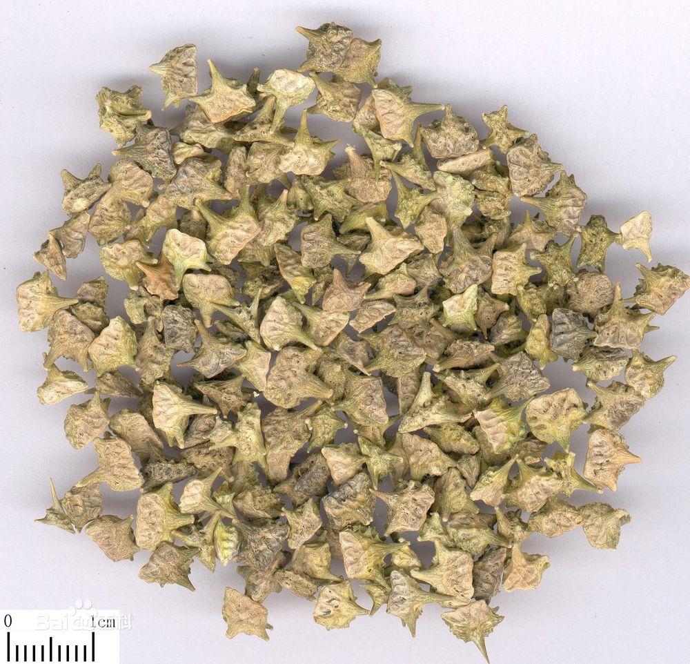Best Herbal Plant Nerunji Mull Tribulus Terrestris Saponins Powder 40 98 Uv