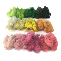 Wholesale Stabilized Preserved Lichen Reindeer Moss for Office decoration vertical garden