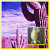 ISO&GMP pure Natural 4:1/10:1/20:1 Cactus/Opuntia stricta extract
