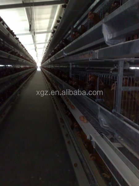 modern automated low price chicken house for layers