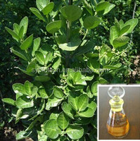Pure Wintergreen Oils Essential Raw Material Spices Essential Oil Trading
