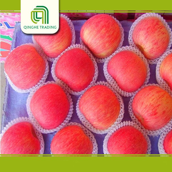 wholesale bulk fresh red fuji apple with market price
