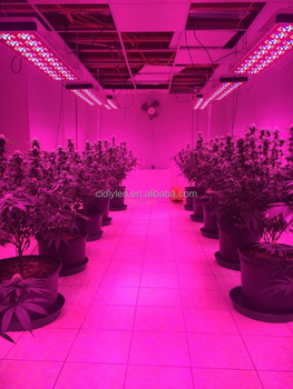 hydroponics horticulture large grow tent cidly led 12/16/20--400w/ & Hydroponics Horticulture Large Grow Tent Cidly Led 12/16/20--400w ...