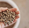 Vietnam Yunnan Green Arabica & Robusta Green Coffee Beans with Premium Quality for sale