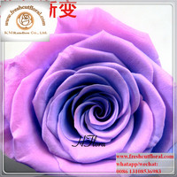Providing Unchanging Preserved-Flowers Roses Shipped All Seasons For Celebration Immediately Delivery