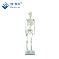 Made In China Life Size Skeleton Model For Training,Cheap Plastic Human Anatomical Skeleton Model