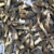 yang du jun Bulk Dried Mushroom Black Morel