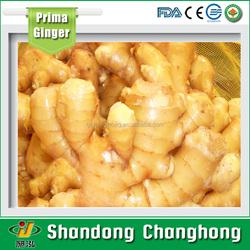 [HOT] bulk fresh ginger/ginger processing plant