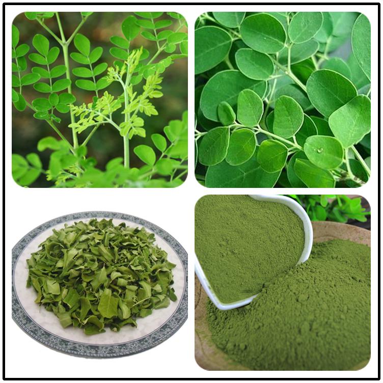 Pure Organic Leaf Oleifera Leaves Extract Moringa Dosage Drum Stick Powder  - Buy Moringa,Moringa Powder Dosage,Drum Stick Powder Product on