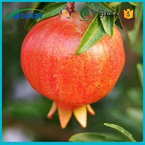 Pomegranate Fruit Peel Extract/Ellagic acid