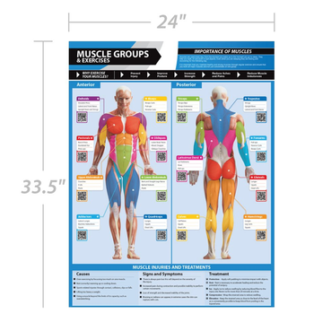 Workout Fitness Medical Human Anotomy muscular system chart with 40 Cable Machine Exercises
