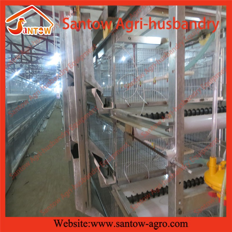 Latest design Broiler Chicken Brood Cage with manure belt