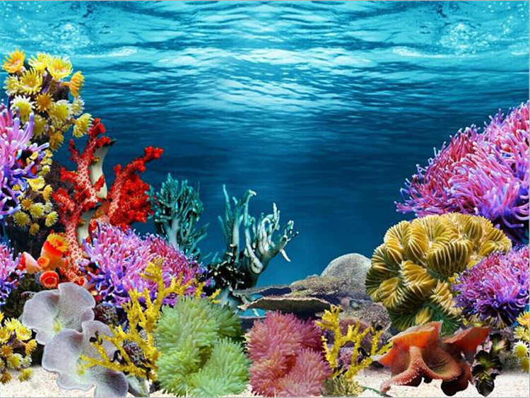 aquarium backgrounds coral - photo #30