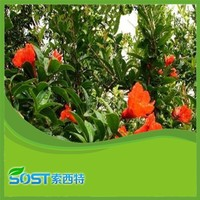 2014 new products free sample pomegranate leaf extract powder