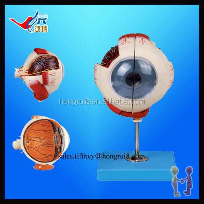Iso Advanced Eyeball Modelhuman Eye Buy Eye Modelplastic Eye