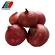 NEW CROP Gansu Red Onion, Fresh Red Onions For Sale