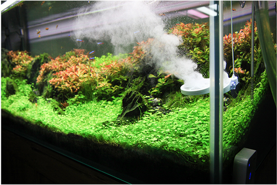 Image gallery shrimp tank for Shrimp fish tank