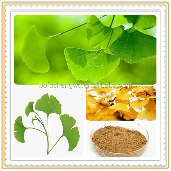 ginkgo biloba leaf extract powder/natural ginkgo extract/ginkgo biloba herbal extract