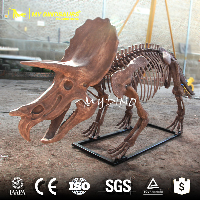 MY DINO-DSS033 Life Size Triceratops Skeleton Fossil