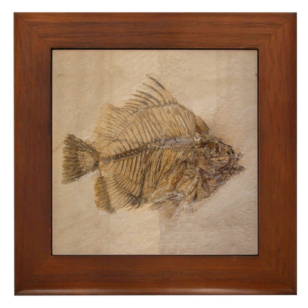Get Quotations Cafepress Fish Fossil 2 Art Framed Ceramic Tile Decorative Wall