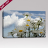 Wall Hanging Scenery Canvas Print White Daisy Flower Printed Artwork for Dining Room