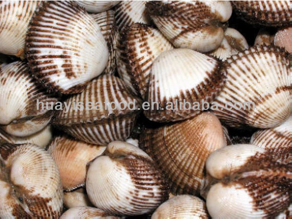 frozen blood clam fresh seafood for sale