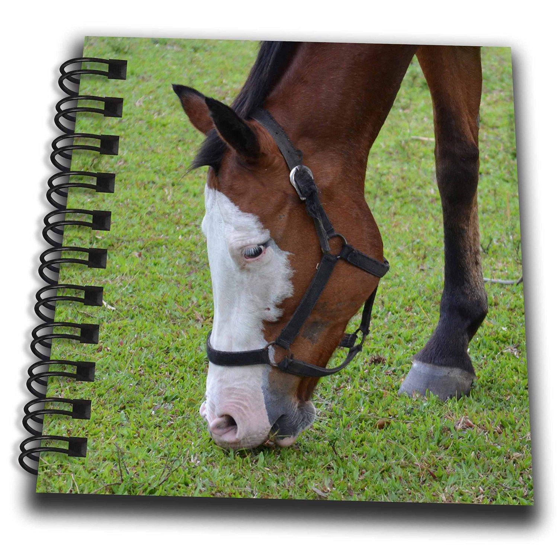 Susans Zoo Crew Animals - Horse Head Grazing White Face - Mini Notepad 4 x 4 inch (db_215989_3)