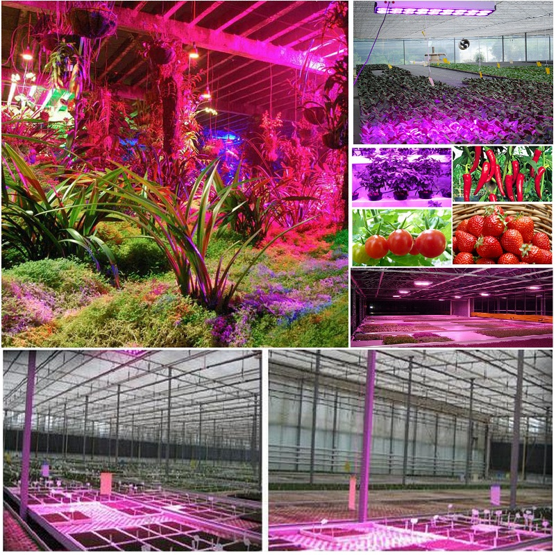 72w 450w 600w Led Grow Light Vertical Hydroponic Tower Lettuces ...
