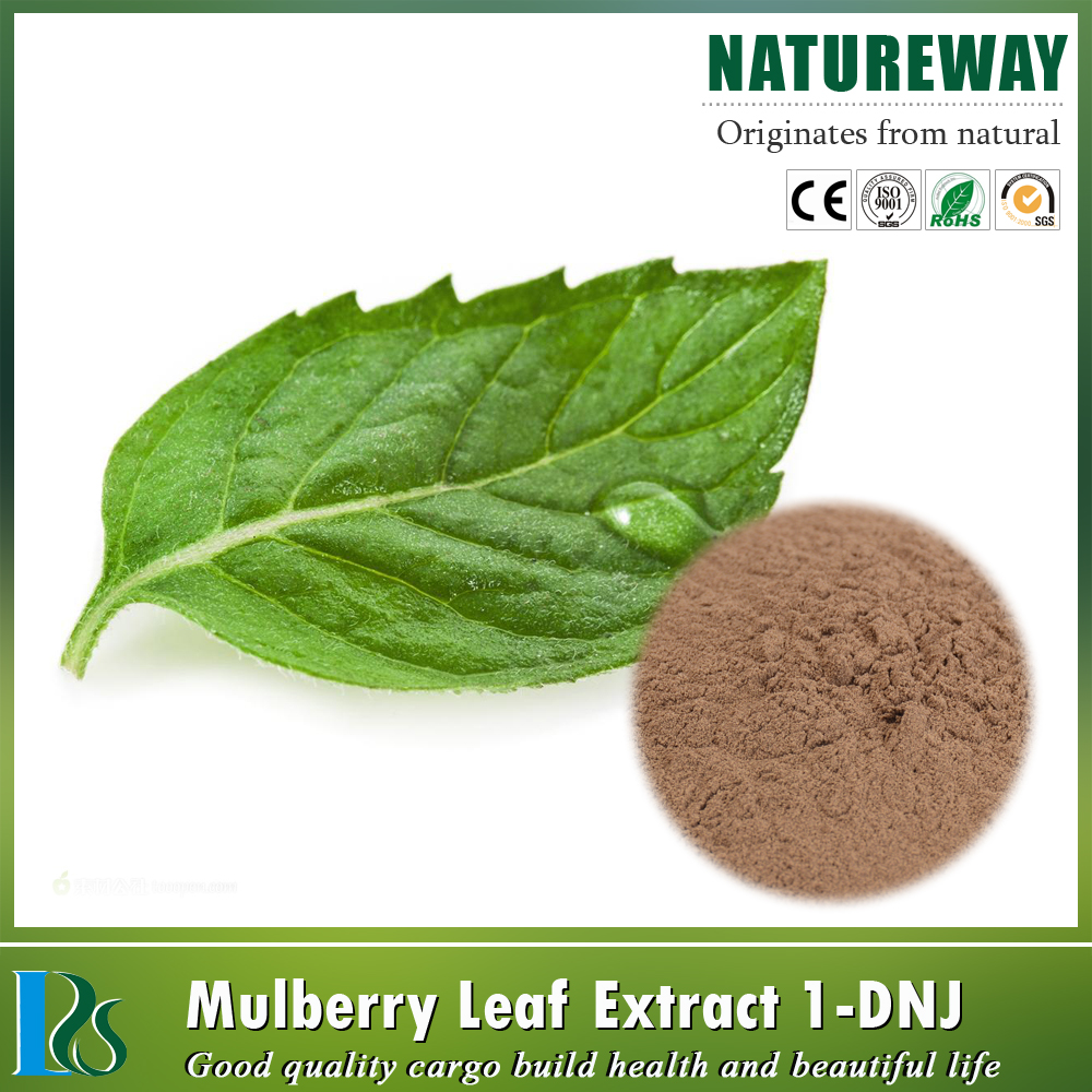 Natural paper mulberry extract 10% flavone,mulberry leaves extract manufacturer