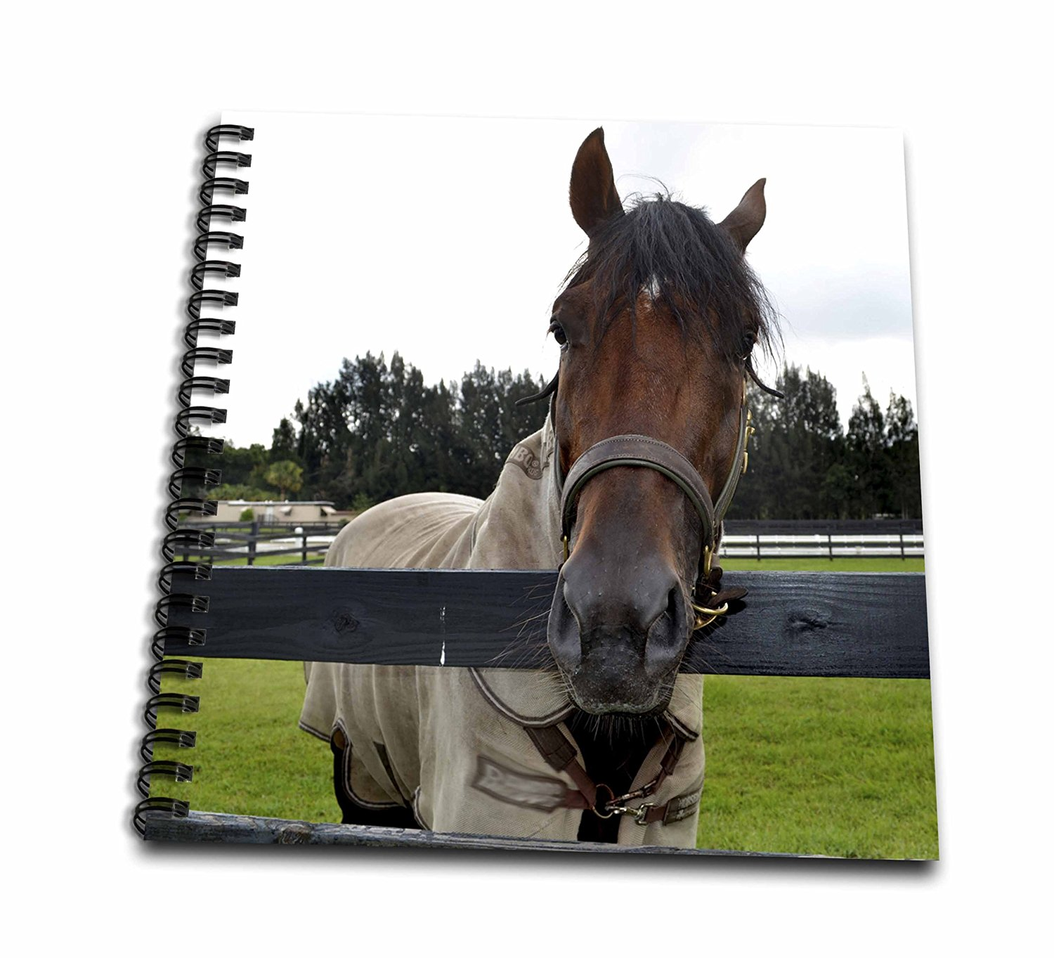 Susans Zoo Crew Animal Horse - Horse head over fence head on - Memory Book 12 x 12 inch (db_196161_2)