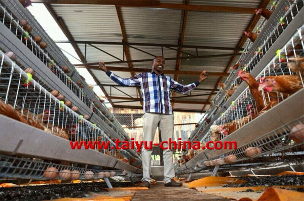 taiyu layer chicken houses for sale in kenya buy layer