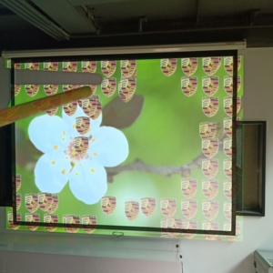 Multi version interactive for all ages and backgrounds playing supporting two, three, four projectors with 35 effects