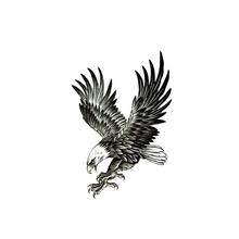 Unduh 100 Foto Gambar Burung Elang Tato  Paling Unik Free