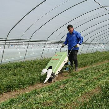 Machine For Small Farm Land Water Spinach Coriander Harvester Machine Buy Spinach Harvester Machine Water Spinach Harvester Machine Coriander Harvester Machine Product On Alibaba Com