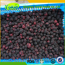 Passed GAP Natural china price frozen blackberry for sale