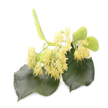 100% Pure Natural Flos Tiliae Duan shu hua Linden flower Tilia leaf dried linden flower
