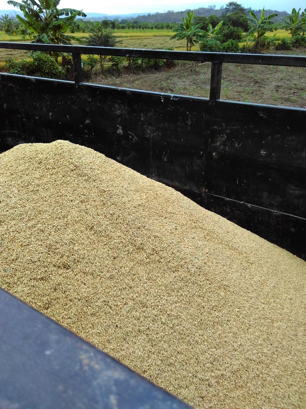 rice harvester machine for sale