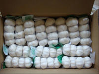2014 snow white garlic in china garlic market