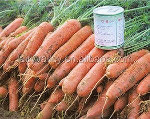 Hybrid F1 carrot seeds For Growing Carrot seeds price-Purple Light